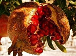 موشحة الهوى الأندلسي – للشاعر أحمد المسّاح
