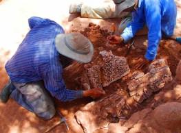 اكتشافات أثرية هامة بالقاعدة المرابطية أغمات (ما بين 2005 و 2014).